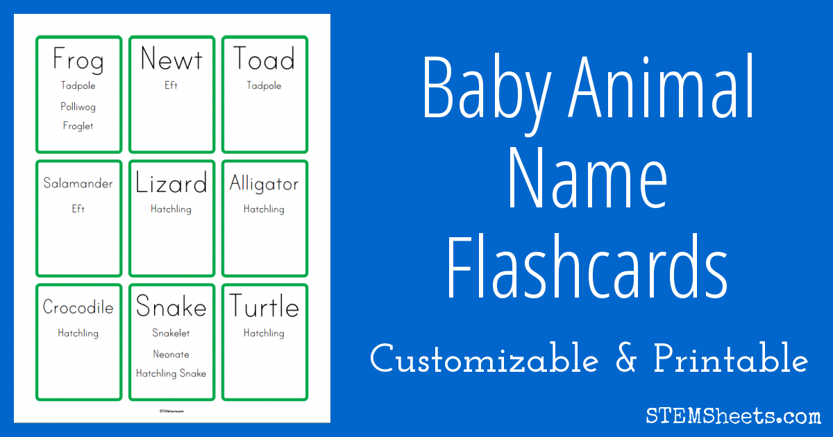picture about Printable Baby Flash Cards known as Child Animal Names Flashcards - STEM Sheets