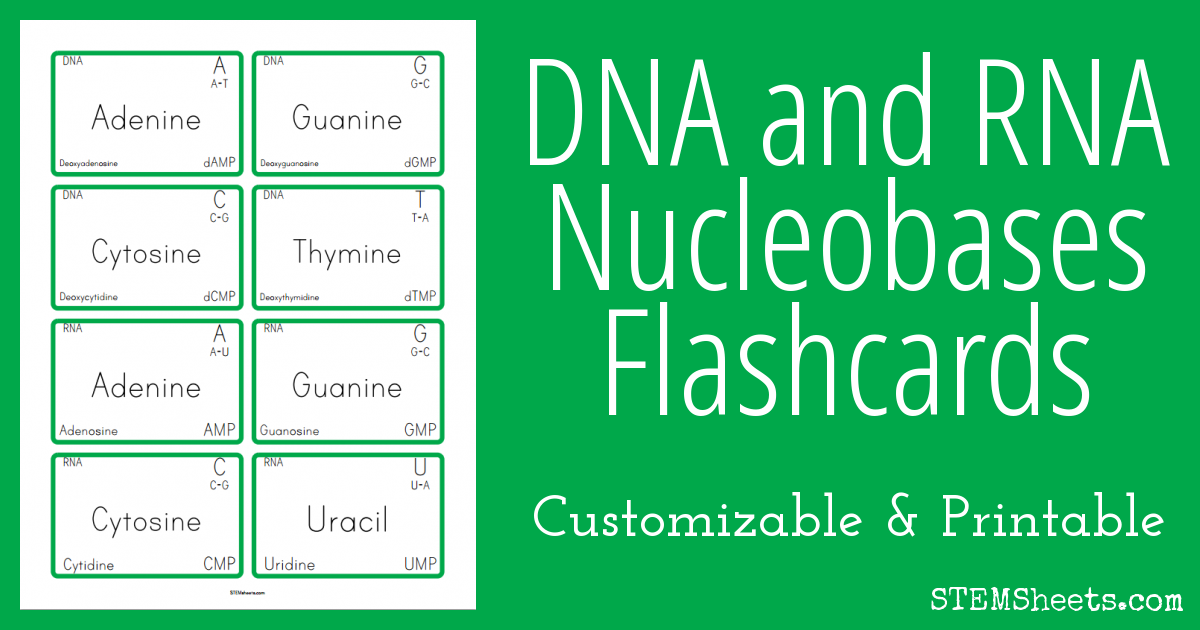 image regarding Amino Acid Flashcards Printable identified as DNA and RNA Nucleobases Flashcards STEM Sheets